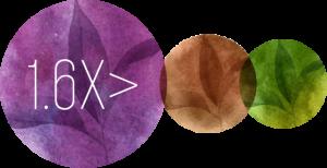 Purple Tea - Polyphenols - Wholesale Tea Supplier - Bulk Tea Supplier